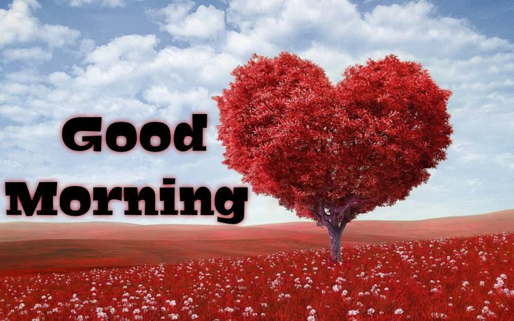 good morning heart photo