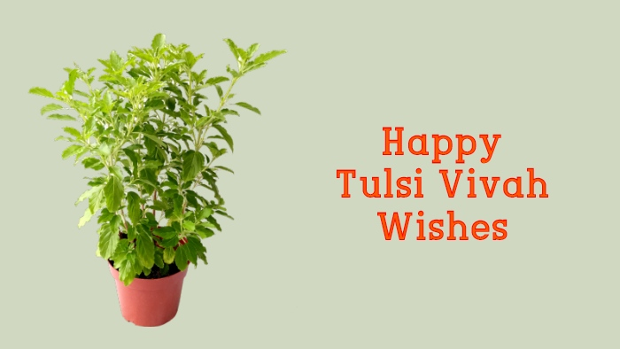 tulsi vivah wishes